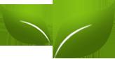 Зелёная вертикаль