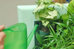 полив растений панель ЖИВАЯ СТЕНА