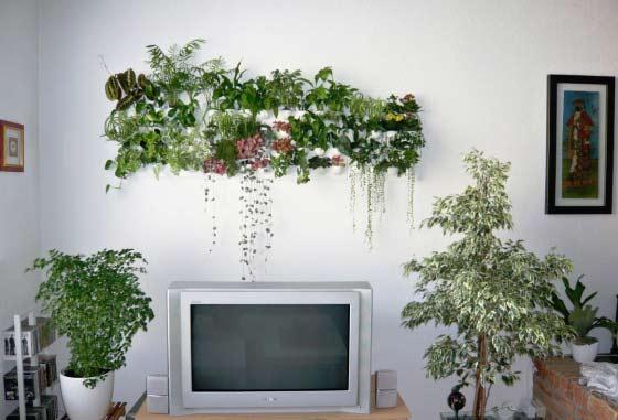 Озеленение квартиры своими руками