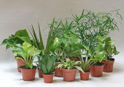 растения для высадки