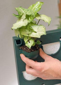 растение на панели